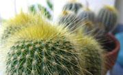 Kaktusi (foto: Behija Salkić)