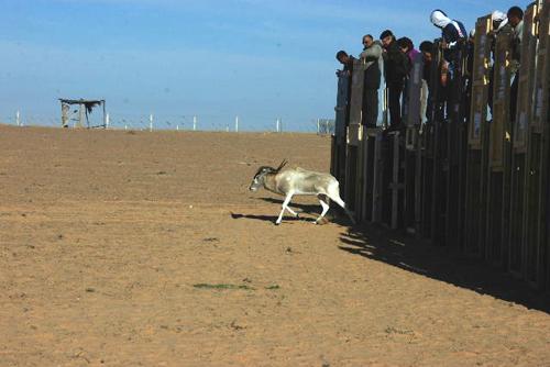 Adaks (foto: Zoo Zg)