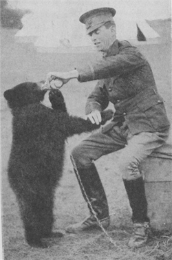 Medvjed u ratu (foto: Gresham Publishing Company)