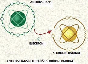 Slobodni radikali (foto: Prirodni lek)