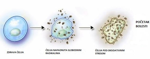 Oštećenja stanica (foto: Prirodni lek)