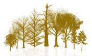 Šume:ilustracija (foto: Danilo Rizzuti / FreeDigitalPhotos.net)