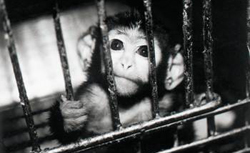 Testiranje na životinjama (foto: PETA)