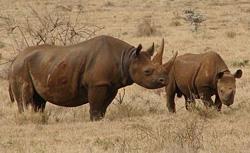Crni nosorog (foto: EOL)