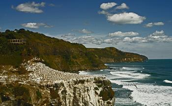 Plaža Muriwai s kolonijama bluna (foto: Flickr)