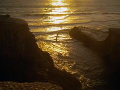 Blune na plaži Muriwai (foto: Morana Mihaljević)