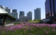 Zeleni krov (foto: Wikimedia Commons)