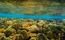 Ocean (foto: NOAA)
