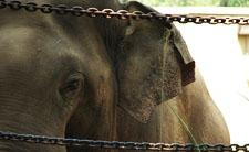 Slon u zoološkom vrtu (foto: Flickr)
