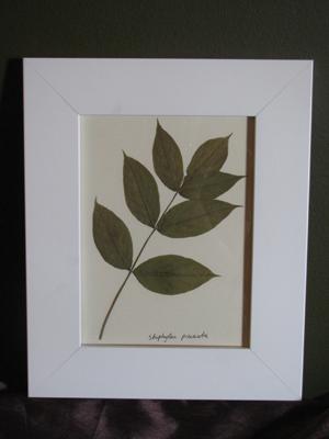 Herbarizirano bilje (foto: Biologija.com.hr)