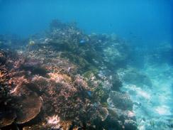Koraljni greben (foto: Morana Mihaljević)