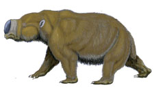 Diprotodon (foto: Wikipedia)