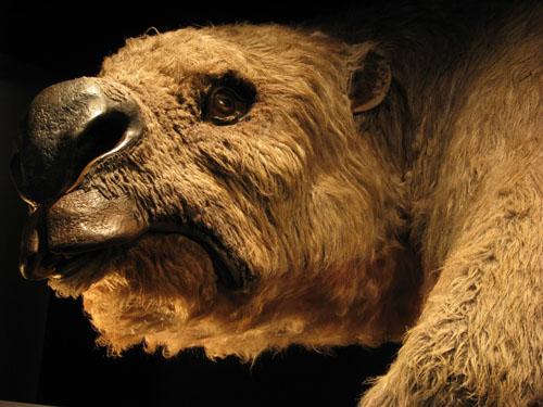 Diprotodon, rekonstrukcija (foto: Gilbert Price)