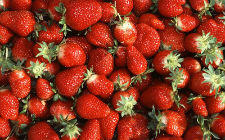 Jagode, Fragaria &times; ananassa (foto: Wikimedia Commons)
