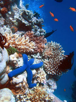 Koraljni greben (foto: Wikimedia Commons)