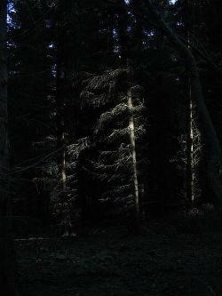 Šuma (foto: Wikimedia Commons)