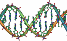 DNA (foto: Wikimedia Commons)