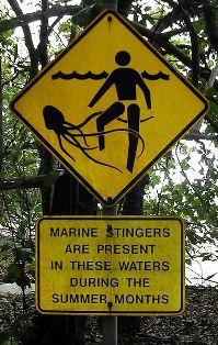 Upozorenje na plaži u Australiji zbog morske ose, Chironex fleckeri (foto: WIkimedia Commons))