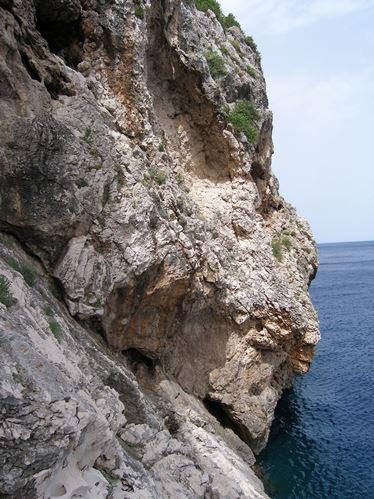 Stanište na kakvom raste C. teutana (foto: doc. dr. sc. Sandro Bogdanović)