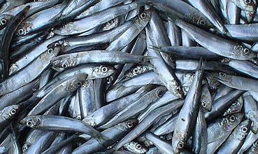 Riba (foto: Wikimedia Commons)