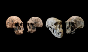 Lubanje ranih pripadnika roda Homo (foto: Chip Clark/Guram Bumbiashvili)