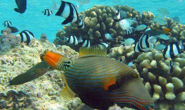 Tropske ribe na koraljnom grebenu (foto: Wikimedia Commons)