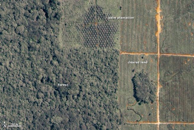 Deforestacija na Borneu (foto: Wikimedia Commons)