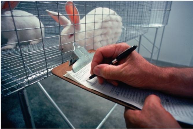 Testiranje na životinjama (foto: USDA/Wikimedia Commons)