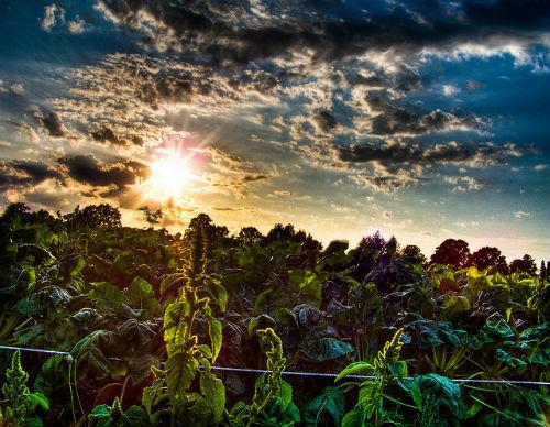 Polje (foto: Thomas Euler / Flickr)