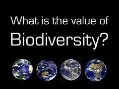 Bioraznolikost (foto: Ron Mader/Flickr)