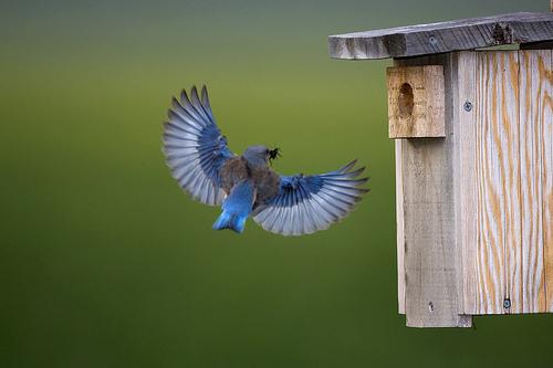 Bioraznolikost (foto: Kevin Cole/Flickr)