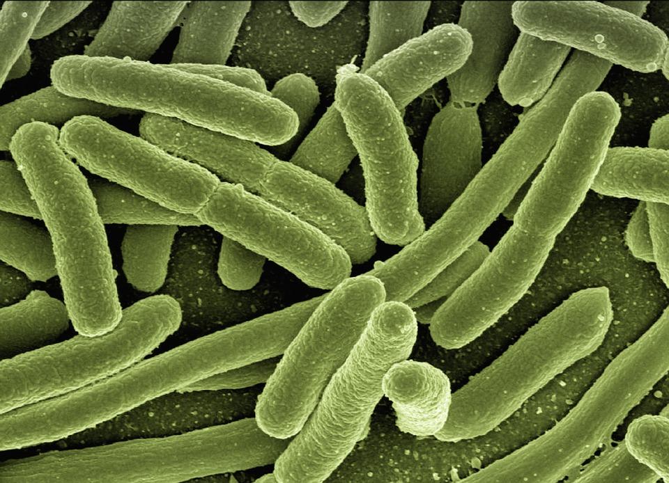 E. coli (foto: pixabay.com, geralt)
