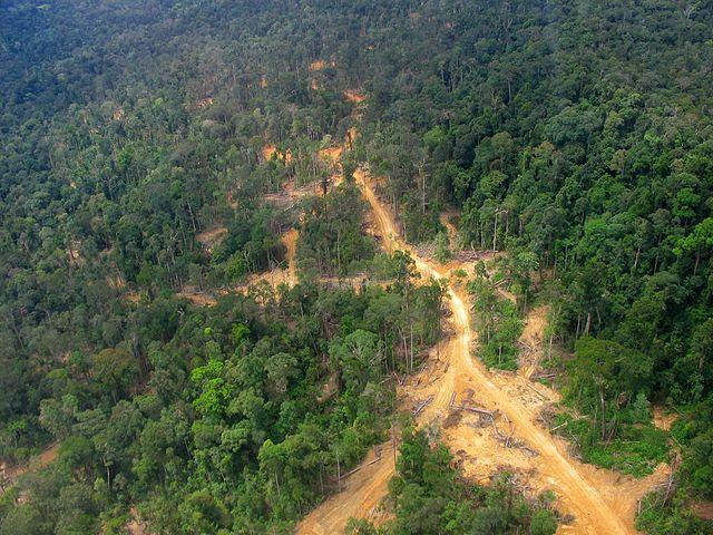 Krčenje šuma u Indoneziji (foto:en.wikipedia.org,Aidenvironment)