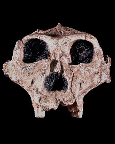Lubanja (foto:efossils.org)