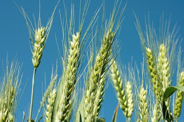 Poljoprivreda (foto: pixabay.com)