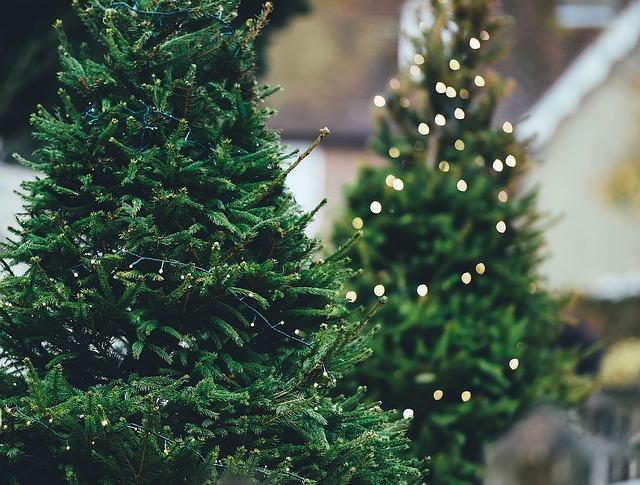 Božićno drvce (foto: pixabay.com)