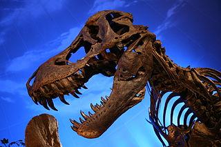 T.rex (foto: commons.wikimedia.org)