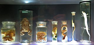 Uzorci u formalinu (foto: commons.wikimedia.org)