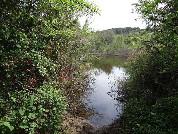 Lokva u Dugom polju (foto:hhdhyla.hr)