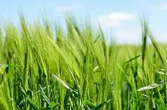 Ekološka poljoprivreda (foto: Pixabay)