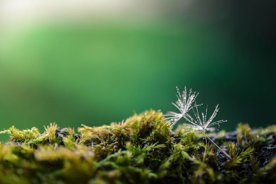 Zaštita okoliša (foto: Pixabay)