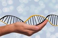 DNK (foto: Pixabay)