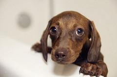 Ustrašeni pas (foto: Flickr)