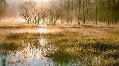 Močvarno stanište (foto: Pixabay)