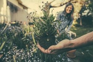 Tjedan bot. vrtova, arboretuma i zbirki (foto: Pixabay)