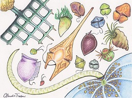 Crtež različitih vrsta planktona (foto: MIXITIN)