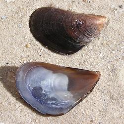 Dagnje (Andrew Butko, Wikipedia)