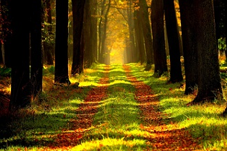 Šuma (foto: Pixabay)